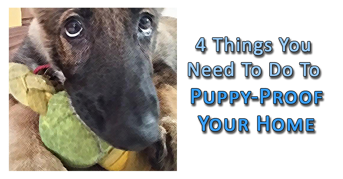 4 things you need to do to puppy proof your home pet for Things you need for a house