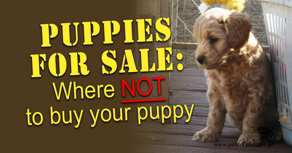 Puppies for Sale: Where NOT To Buy Your Puppy – Pet Centrics